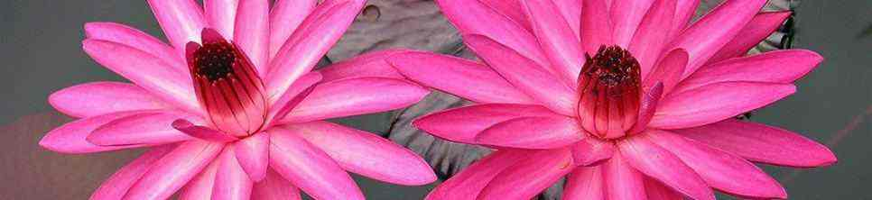 Very Rare Pink Flowers
